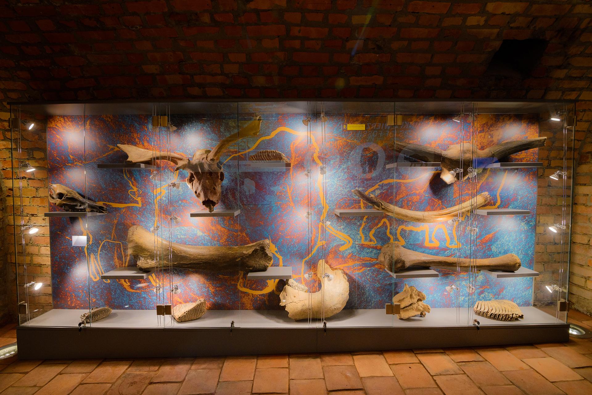 Paleontologia - wystawa kości