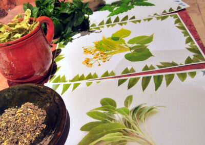 Rysunki roślin